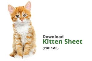 Download Kitten Sheet