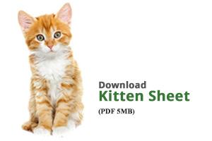 Download Kitten Sheet