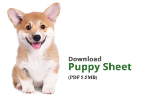 Download Puppy Sheet